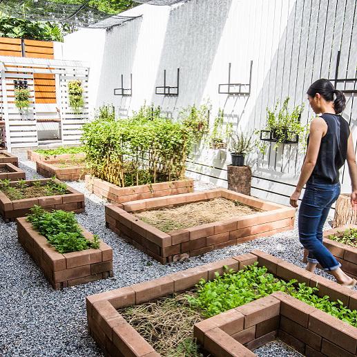 สวนผักคนเมือง สวนผักหลังบ้าน กลางเมือง ของเชฟตาม Top Chef Thailand